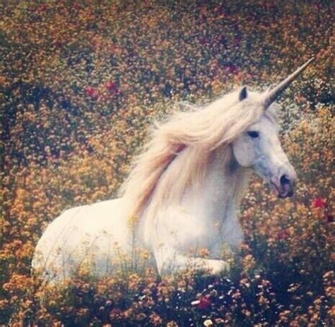 10 razones por las que todos necesitamos un unicornio de ...