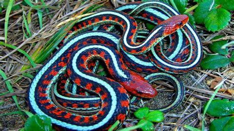 10 Serpientes Exóticas Únicas En El Mundo   YouTube