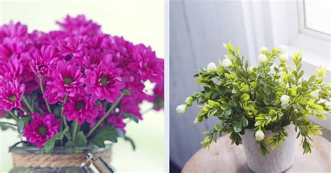10 Sorprendentes plantas que atraen energía positiva y te ...