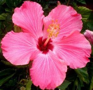 10 tipos de flores  imagenes    Imágenes en Taringa!