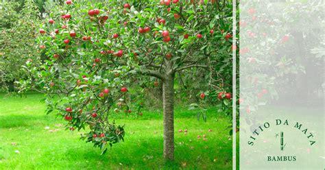 10 Tipos de Plantas Frutíferas Para Ter no Quintal de Casa ...