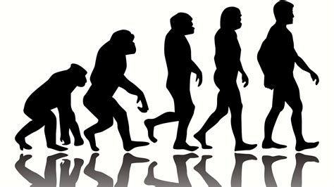 10 Weird Facts about Human Evolution   YouTube