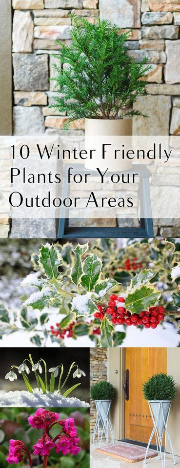 10 Winter Friendly Plants for Your Outdoor Areas   Page 2