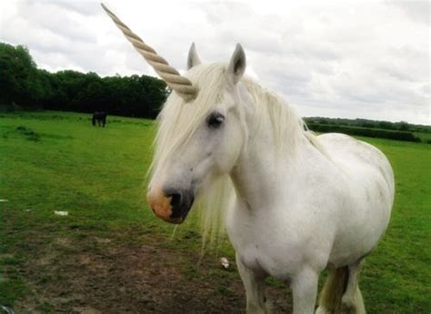 100+ ideas to try about Unicorns are Real! | A unicorn ...