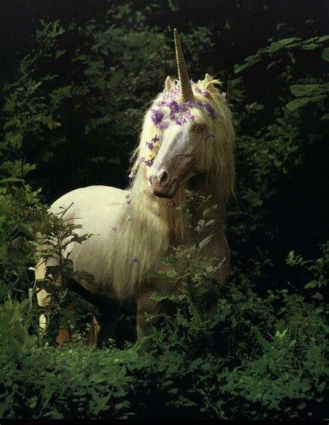 1000+ images about Unicorns on Pinterest | Unicorn names ...