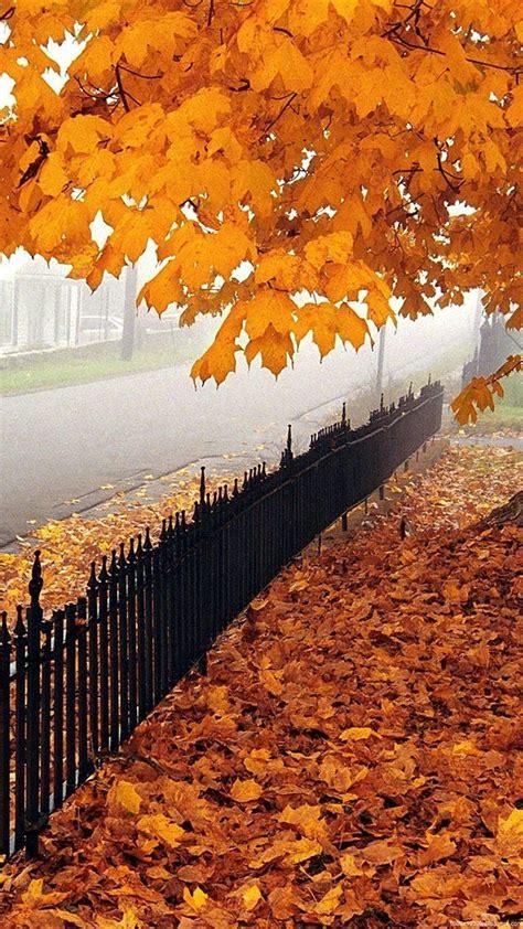 1080x1920 Beautiful Autumn Nature Wallpapers HD