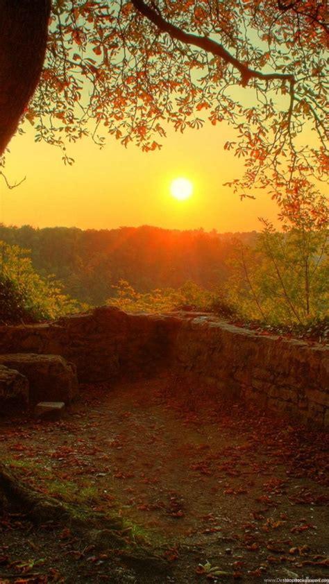 1080x1920 Nature Romantic Tree Autumn Line Wallpapers HD ...