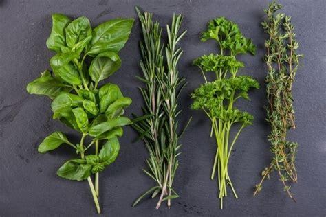 11 formas de conservar tus hierbas   Bioguia