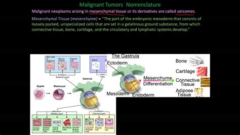 112P   Nomenclature of benign and malignant cancers, How ...