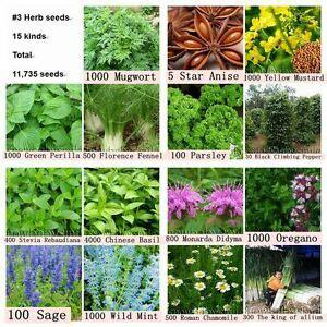 11,735 Semillas de Hierba Planta Jardín 15 tipos especias ...