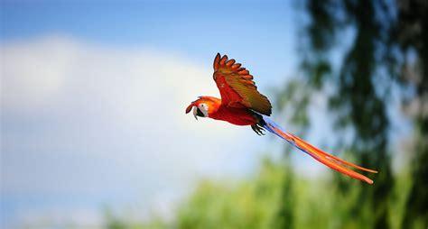 12 fotos espectaculares y coloridas de guacamayas ...