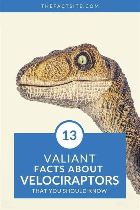 13 Valiant Facts About Velociraptors   The Fact Site ...