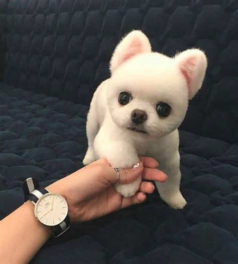 14 adorables fotos de cachorros antes de crecer   Schnauzi.com