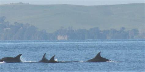 14 Curiosidades sobre las famosas ballenas Orcas