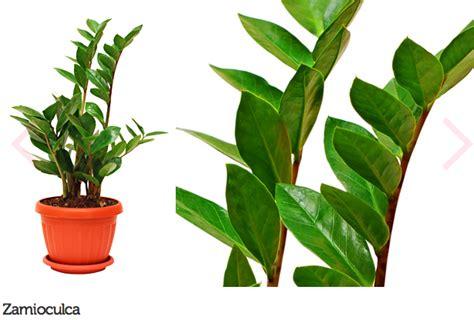 14 tipos de plantas para decoração de consultório ou ...