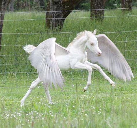 143 best Unicorns and Pegasus images on Pinterest | Horses ...