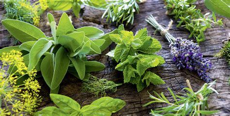 15 Hierbas aromáticas que son fáciles de cultivar en casa