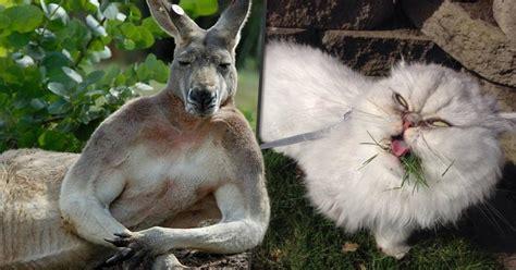 ¡15 Imágenes de animales en situaciones graciosas!   Para ...