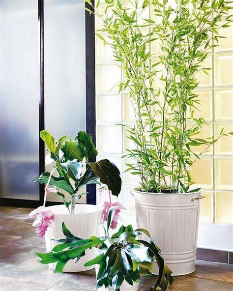 15 plantas de interior resistentes y de fácil mantenimiento