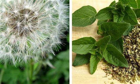 15 plantas medicinales que puedes plantar tú mismo en casa ...