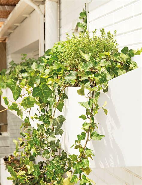 15 plantas para jardín resistentes al sol y llenas de color