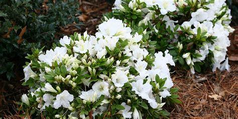 15 Plantas Perennes Que Florecen Todo El Año