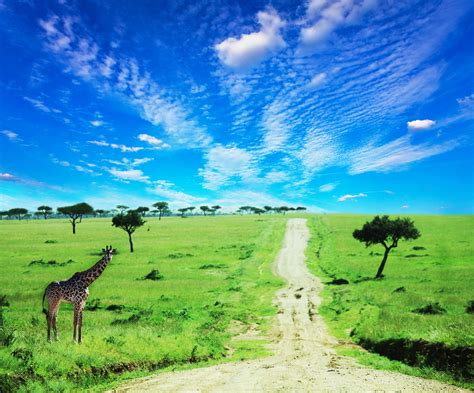 15 Things Kenyans Miss Most While Living Abroad ...