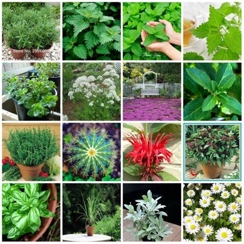 15 Tipos De Hierbas Semillas Jardín de DIY Maceta O Jardín ...