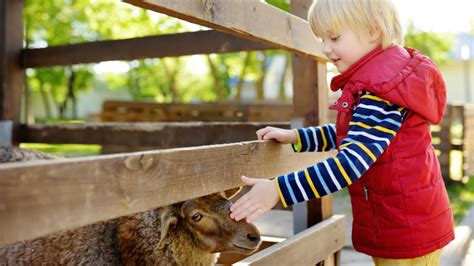 16+ Adorable Petting Zoos in Georgia: A Few May Surprise You