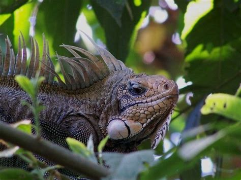 16 Best images about Amazonas on Pinterest | Trees, We and ...