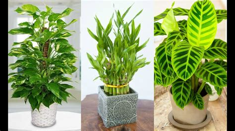 16 Best Indoor Shade Plants for Low Light Rooms   YouTube