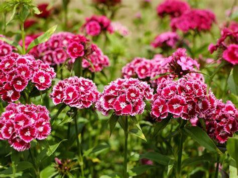 16 flores resistentes al sol y perfectas para tu jardín