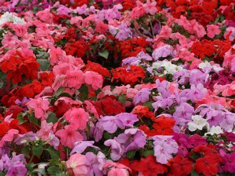 16 Plantas de Jardín con Flores resistentes al Sol   Lista ...