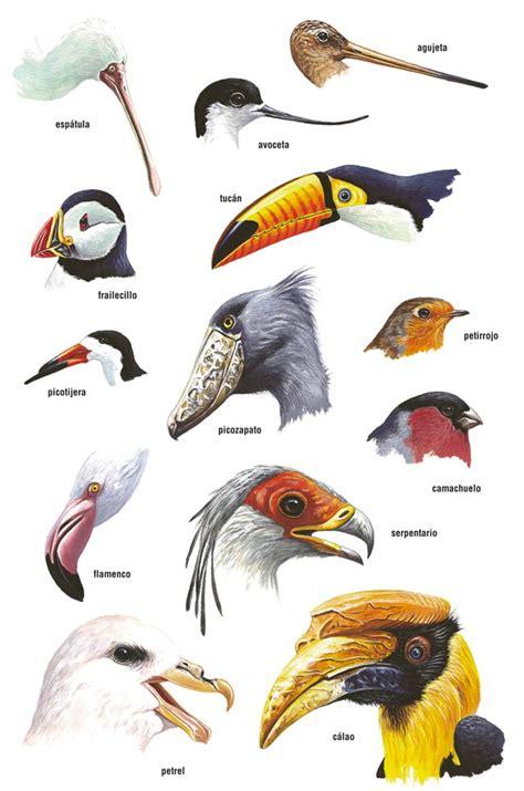 16. Taller de forma y función en aves  2012