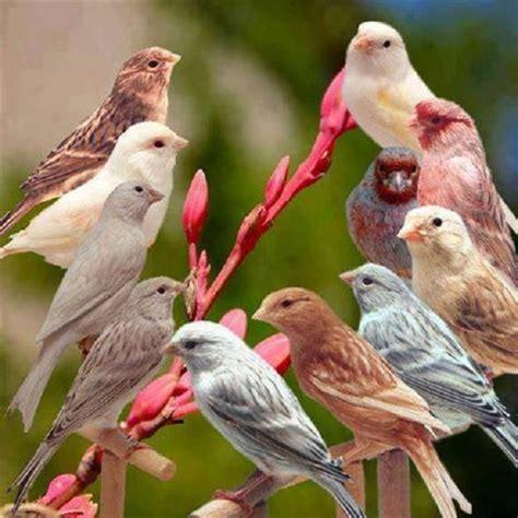 17 Best images about Canaries on Pinterest | Birds, Pet ...