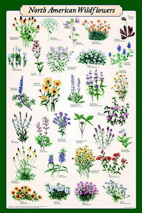 17 Best images about plants on Pinterest | Trees and ...