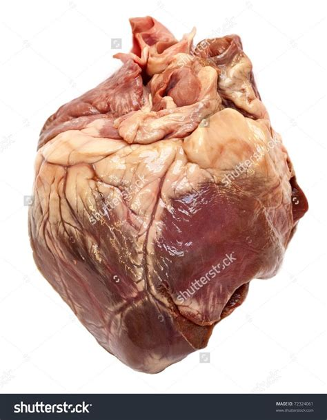 18 best images about Reference: Human Heart on Pinterest ...