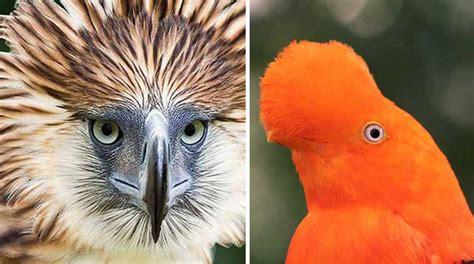 18 pájaros que no creerás que existen en este mundo | Upsocl