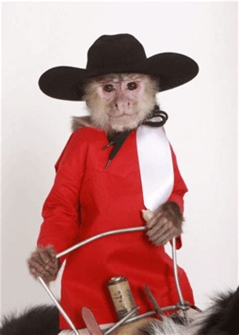 183 best images about Smoking Monkeys on Pinterest | Oil ...