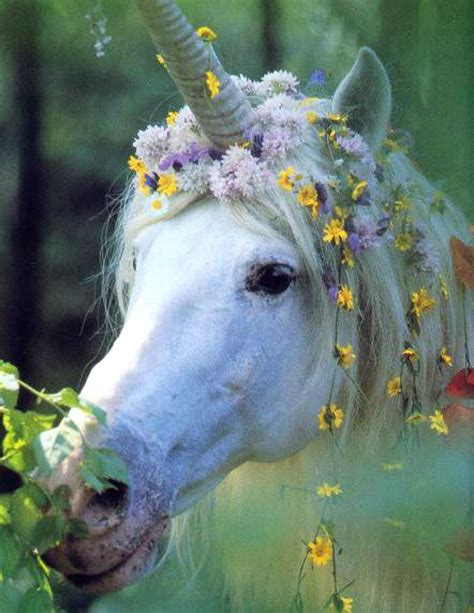 187 best Unicorns Wings & Magical Things images on ...