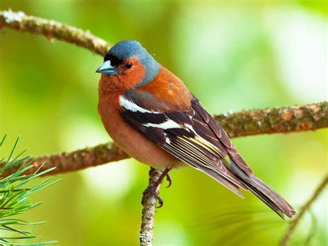 19 common British birds in your garden | lovethegarden