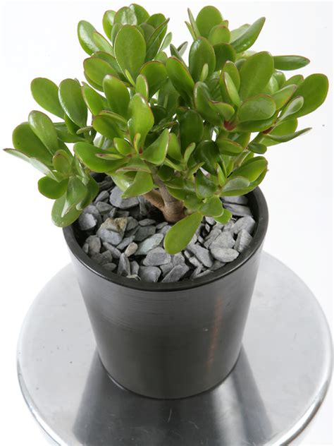 19 Easiest Houseplants You Can Grow without Care | Balcony ...
