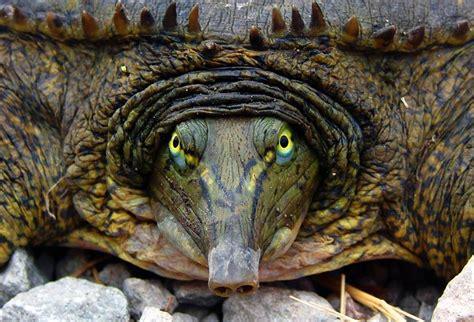 19 weird and wonderful turtle and tortoise species | MNN ...