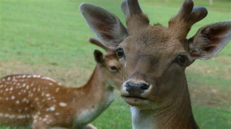1o Parco Zoo della Fauna Europea  Poppi    2018 All You ...