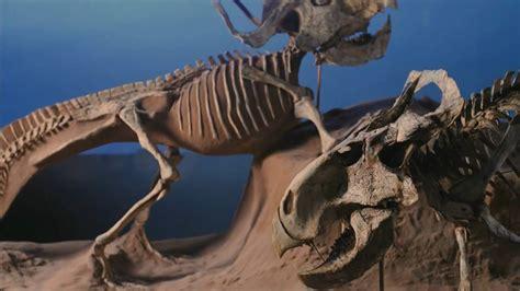 2/3  Dinosaurs Alive! HD en español   YouTube