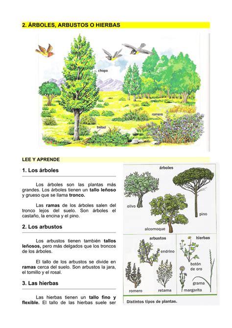 2. ÁRBOLES, ARBUSTOS O HIERBAS 1. Los árboles 2. Los