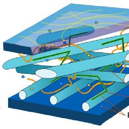 2. Estructura de la pared celular. Componentes ...