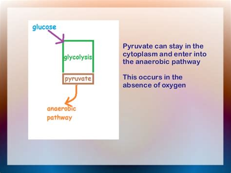 2. glycolysis
