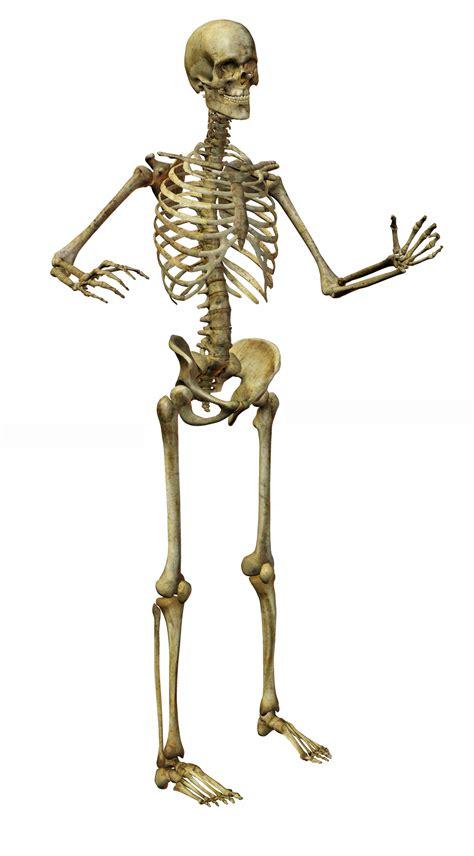 2 Imágenes de Esqueletos en Calidad Alta   Imagenes