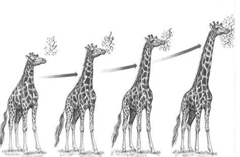 2. La evolución biológica